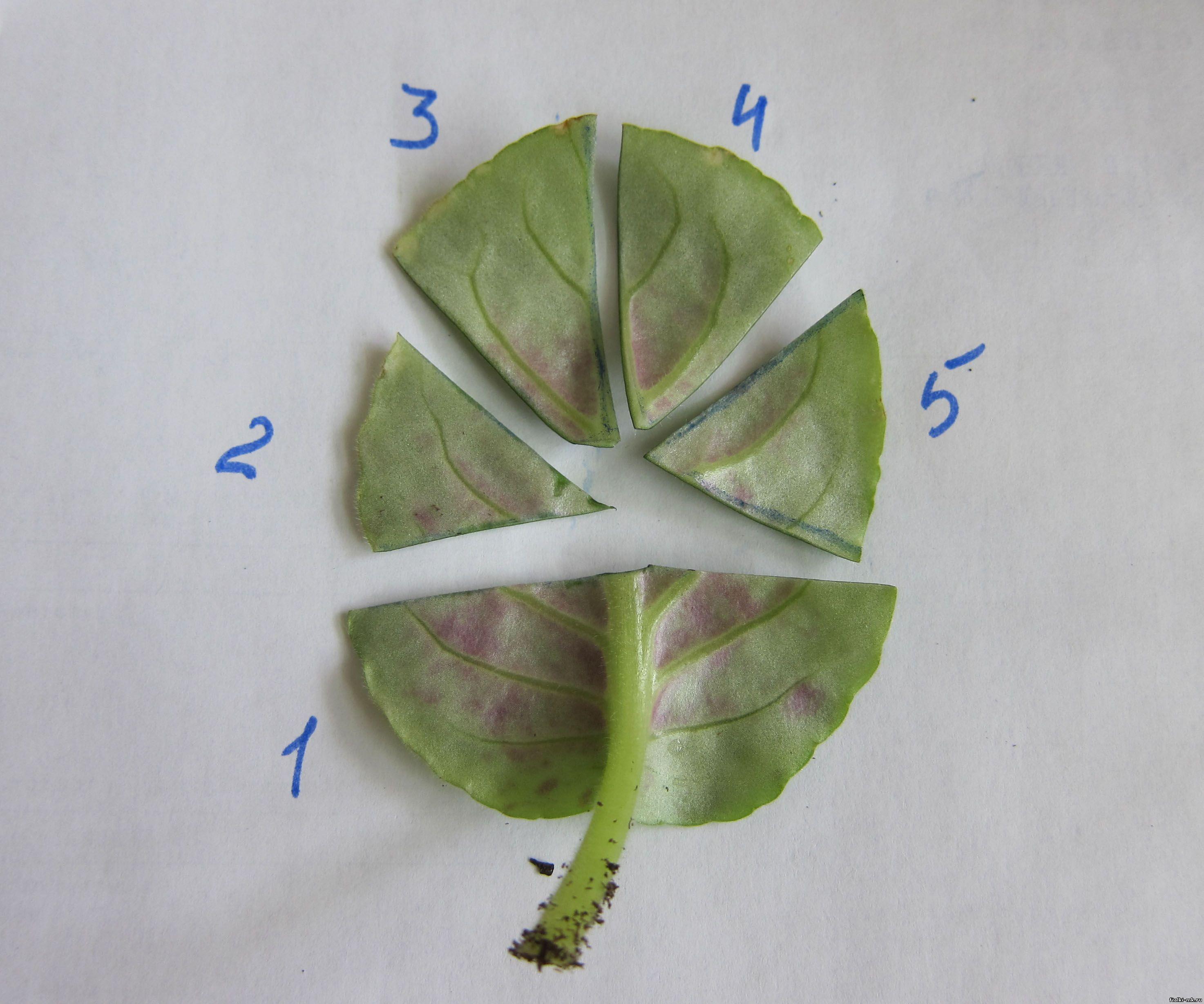 Семена экзотических и редких 28